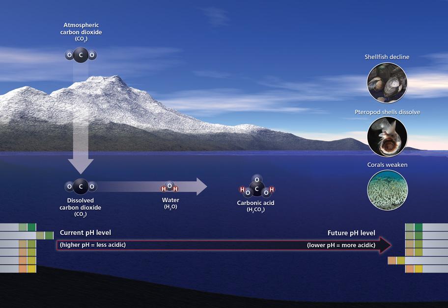 Climate Communication   Ocean Acidification